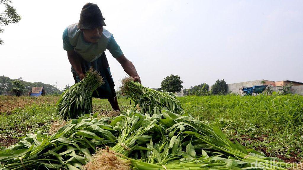 Ini Capaian Positif Sektor Pertanian Jokowi-JK