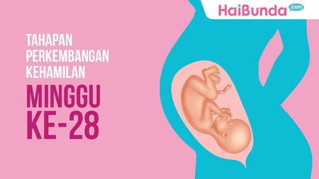 Tahapan Perkembangan Kehamilan: Minggu ke-28
