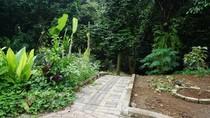 Bukan di Sleman, Kebun Salak yang Lebat ini Ada di Kota Jakarta