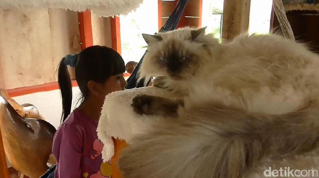 Sensasi Seru Berinteraksi Bersama Kucing Manja di Garut