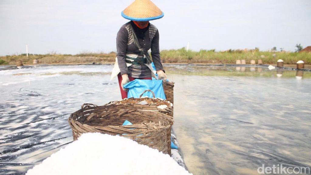 Lewat Tol Laut, 14 Kontainer Garam Diangkut dari NTT ke Surabaya