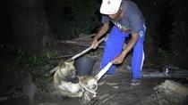 Bali Ingin Akhiri Perdagangan Daging Anjing