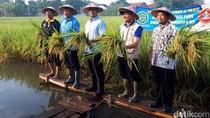 Panen Padi di Sleman, Anies Baswedan Pertimbangkan Kerjasama dengan DIY