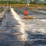 Curah Hujan Tinggi, Produksi Garam Lokal Terganggu