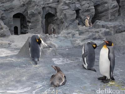 Foto: Penguin dan Aneka Fauna Lucu di Jepang