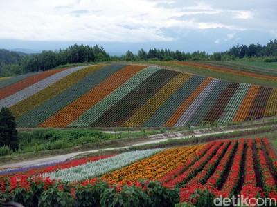 Ini Kebun Bunga Pelangi yang Ajaib di Jepang