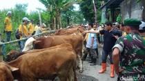 Sukseskan Sapi Wajib Bunting, Hewan Ternak di Kediri Diberi Vitamin