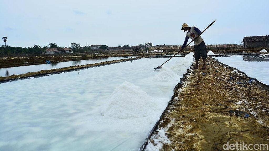 Gara-gara Hujan, Produksi Garam di Madura Hingga Cirebon Mandek