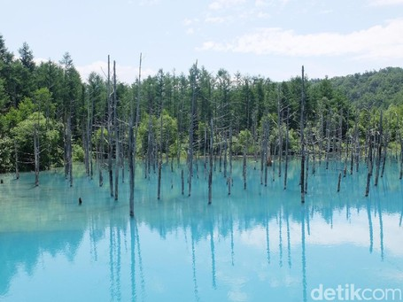 Foto: Aoiike, Kolam Biru Jepang yang Terlalu Cantik