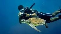 Foto: 10 Tempat Menyelam Terbaik di Asia