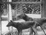 Ilmuwan Australia Temukan Ratusan Fosil Jejak Binatang Purba di Pulau Kanguru