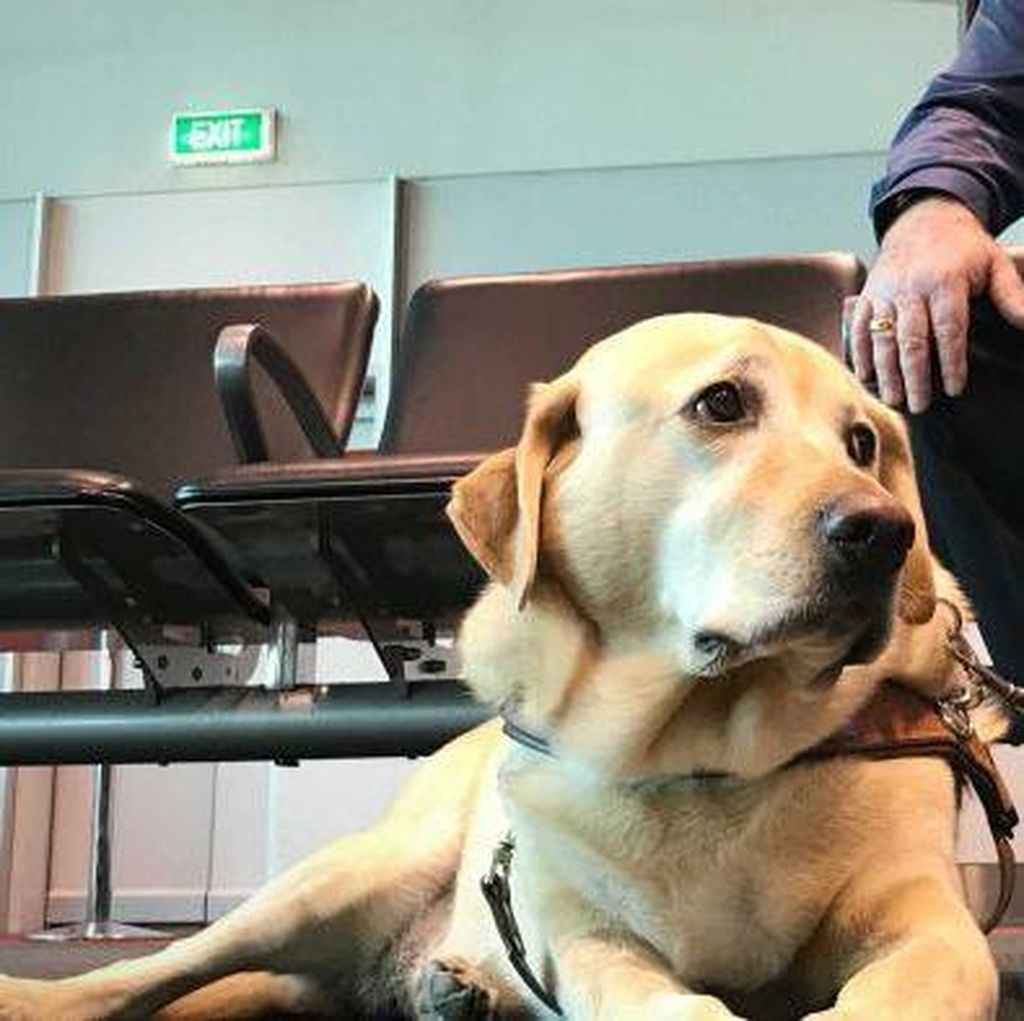 Anjing Australia Dapat Gelar Frequent Flyer