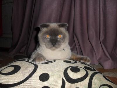 Cerita Kucing Jadi Walikota, Karena Banyak Manusia yang Korupsi