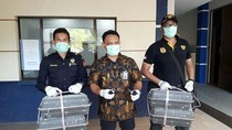 Penyelundupan 4 Ribu Burung Murai ke Batam Digagalkan