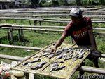 Kelangkaan Garam, Produsen Ikan Asin Pekalongan Berhenti Produksi