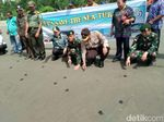 600 Ekor Tukik Dilepas ke Laut Pantai Muara Tami Papua