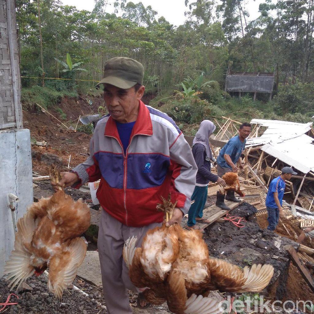 Peternakan di Garut Tertimbun Longsor, Ribuan Ayam Mati
