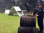 Anjing Polisi di Australia Selatan Kini Dilengkapi Rompi Antipeluru