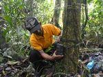 Mengidentifikasi Harimau Sumatera di Hutan Gambut Riau