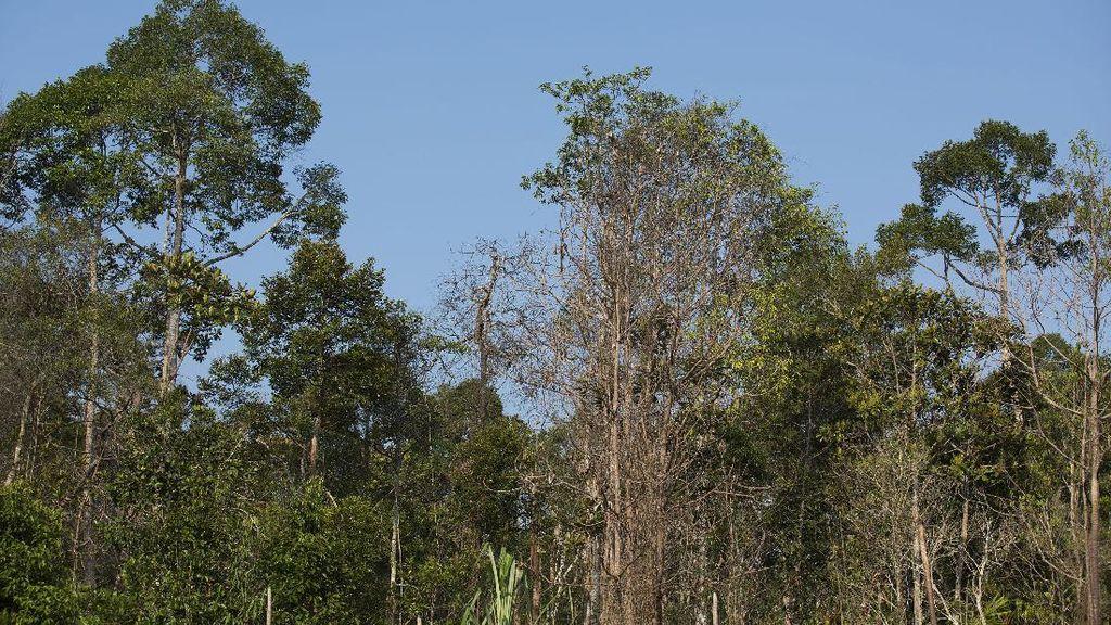 Puluhan Spesies Langka Ditemukan di Semenanjung Kampar Riau