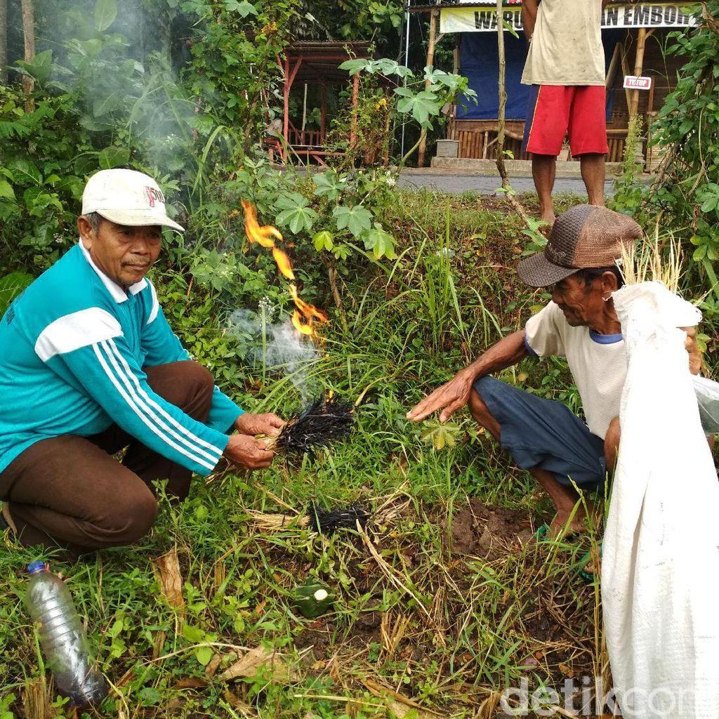 Petani Padi di Trenggalek Lakukan Tradisi Ider-ider Jelang Panen Raya