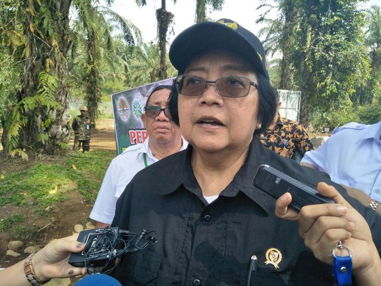 KLHK akan Pasang Camera Trap untuk Pastikan Jejak Harimau Jawa