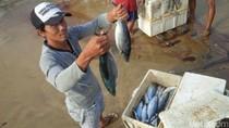 Usai Paceklik, Nelayan Pantai Selatan Banyuwangi Panen Raya Ikan