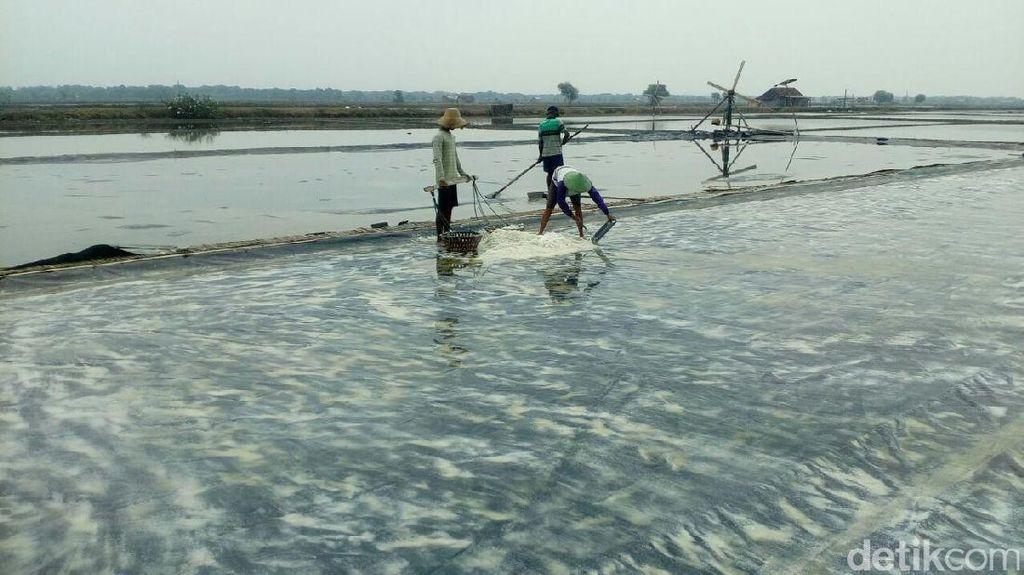 Salut! Perjuangan Petani Garam di Tengah Ancaman Gagal Panen