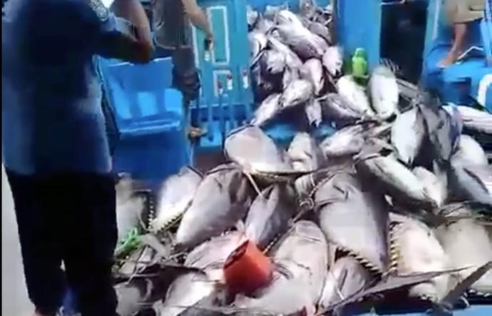 Banjir Tuna di Sendang Biru