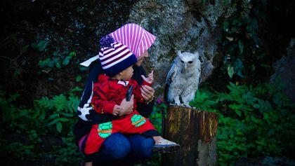 lebih dekat dengan si popo, burung hantu di wisata batu ratap