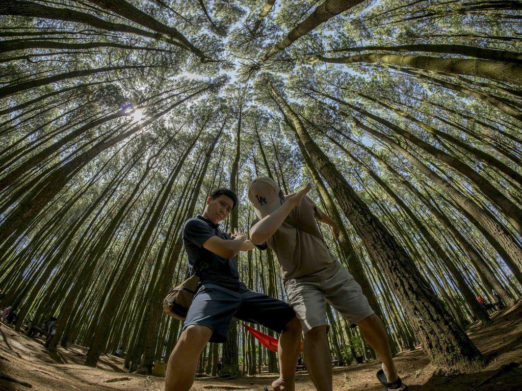 Dab Dance di Hutan Pinus