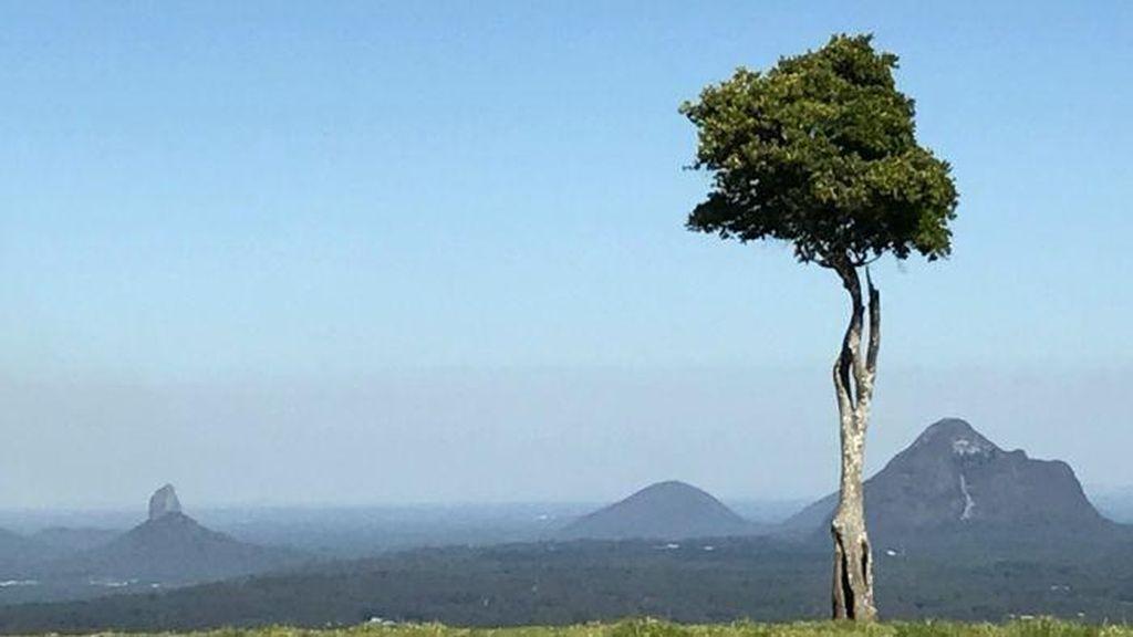 Inilah Pohon yang Paling Sering Difoto di Australia