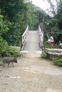 Melewati jembatan gantung (Kurnia/detikTravel)