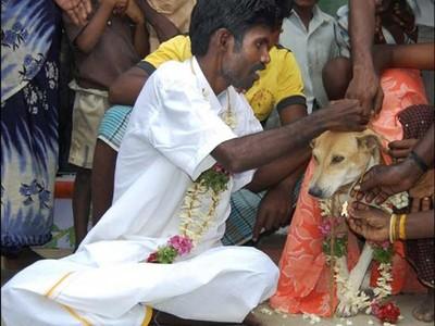Waduh, Ada Ritual Manusia Menikahi Anjing di India