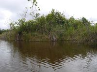 Pulau di tengah danau (Kurnia/detikTravel)
