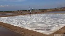 Petani Garam Pasuruan Kejar Target Produksi