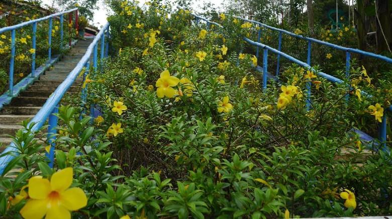 Foto: Kebun Raya Sekayam di Sanggau (Kurnia/detikTravel)