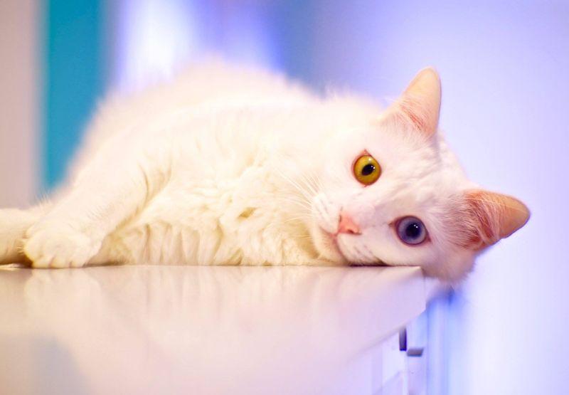 Museum kucing ini berada di Jalan Purvis 8, Singapura (The Cat Museum,Muses and Mansion of Singapore/ Facebook)