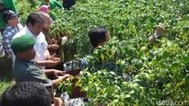 Cek Stok Cabai, Dirjen Hortikultura Blusukan di Sleman