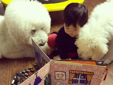 Mame serius banget. Lagi bacain cerita apa sih untuk dua anjing pudelnya? (Foto: Instagram/ @tamanegi.qoo.riku)