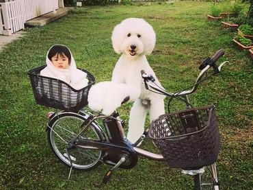 Mame mau dibonceng anjing peliharaannya ke mana nih? (Foto: Instagram/ @tamanegi.qoo.riku)