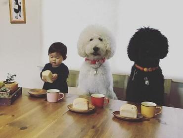 Untuk urusan makan pun, mereka kompak banget. (Foto: Instagram/ @tamanegi.qoo.riku)
