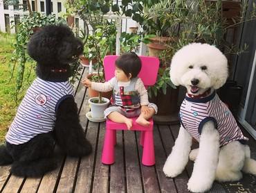 Lagi asyik main difoto, eh cuma satu anjing pudelnya Mame yang sadar kamera. (Foto: Instagram/ @tamanegi.qoo.riku)