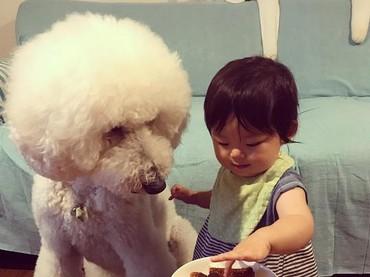 Anjing pudelnya mau disuapin apa, Mame? (Foto: Instagram/ @tamanegi.qoo.riku)