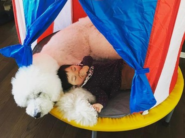 Tidur di tenda pun tetap pulas. Yang penting selalu bersama. (Foto: Instagram/ @tamanegi.qoo.riku)