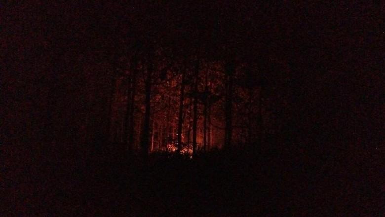 Kebakaran Lahan Terjadi di Kawasan Perhutani Mojokerto