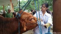 Hewan Kurban di Kabupaten Blitar Ditemukan Indikasi Parasit Darah