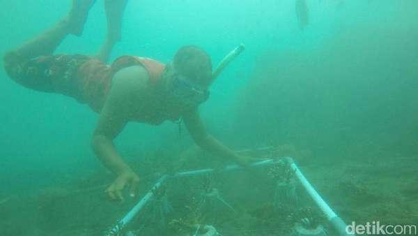 Arti Kemerdekaan di Mata Nelayan Selamatkan Terumbu Karang