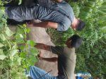 Luka Parah, Gajah Liar di Aceh Ditemukan Mati setelah Diobati
