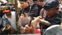 Lempar Kepala Kerbau, Tradisi Warga Trenggalek Syukuri Hasil Tani